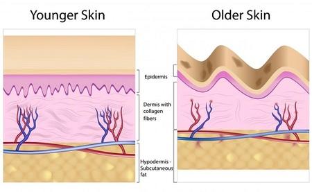 Collagen Levels In Skin