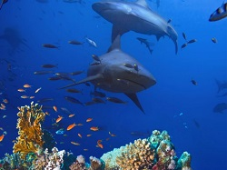 Deep Sea Miracle Oil Squalene